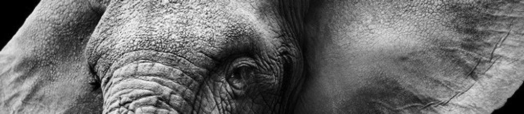 elephant WEB 2_129316358-3